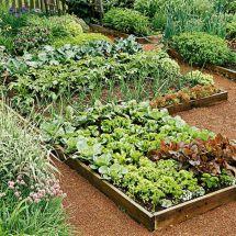 First Vegetable Garden