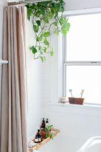 Bathroom Shower Plants