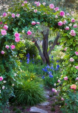 Eden Rose Entrance