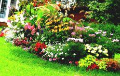 Flower Garden Design Idea Design