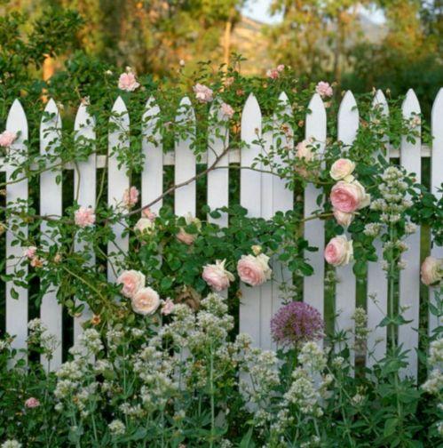 Red Eden Climbing Rose in Garden Ideas