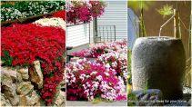 Small Back Yard Flower Garden Ideas
