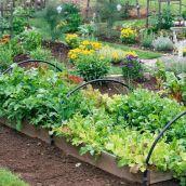 Beautiful Fall Garden Ideas For Awesome Fall Season 310