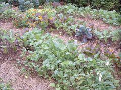 Beautiful Fall Garden Ideas For Awesome Fall Season 70