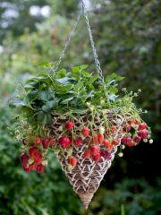 Awesome Vertical Garden Inspiration 144