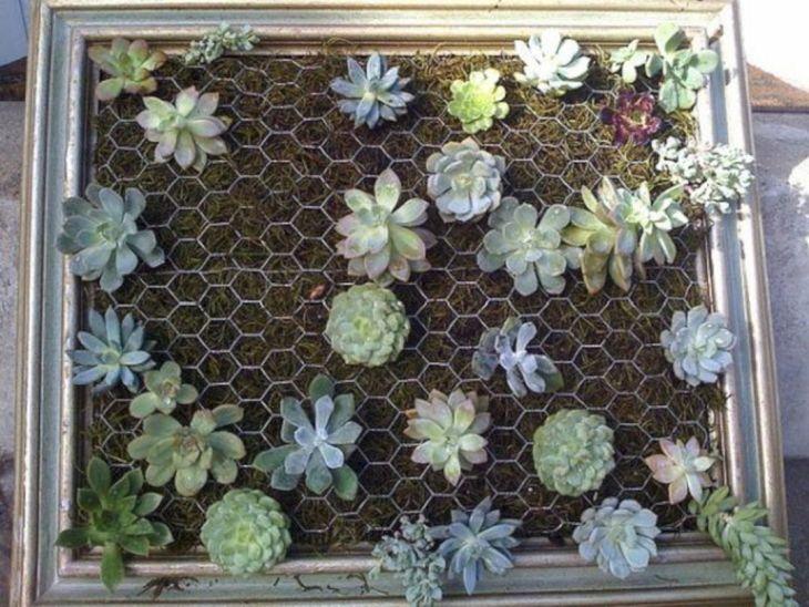 DIY Succulent Wall Gardens