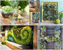 DIY Succulent Wall