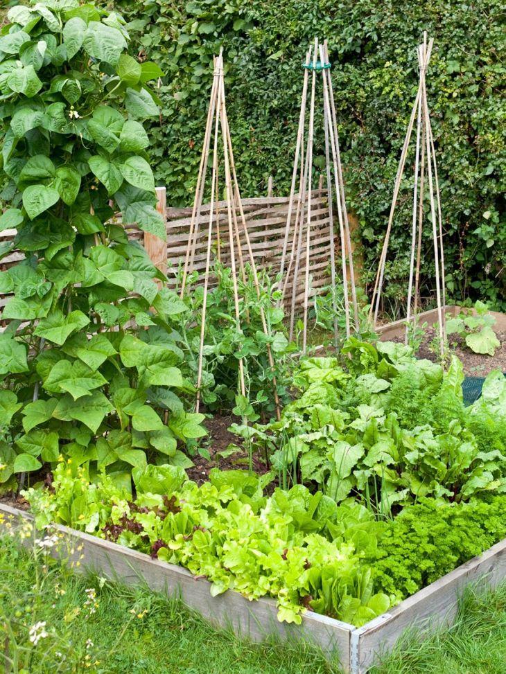 Growing Small Vegetable Garden