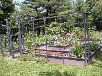 Small Vegetables Garden
