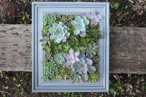 Succulent Living Wall Planter