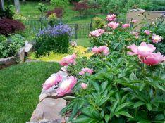 Flowers Gardens Landscape Spring