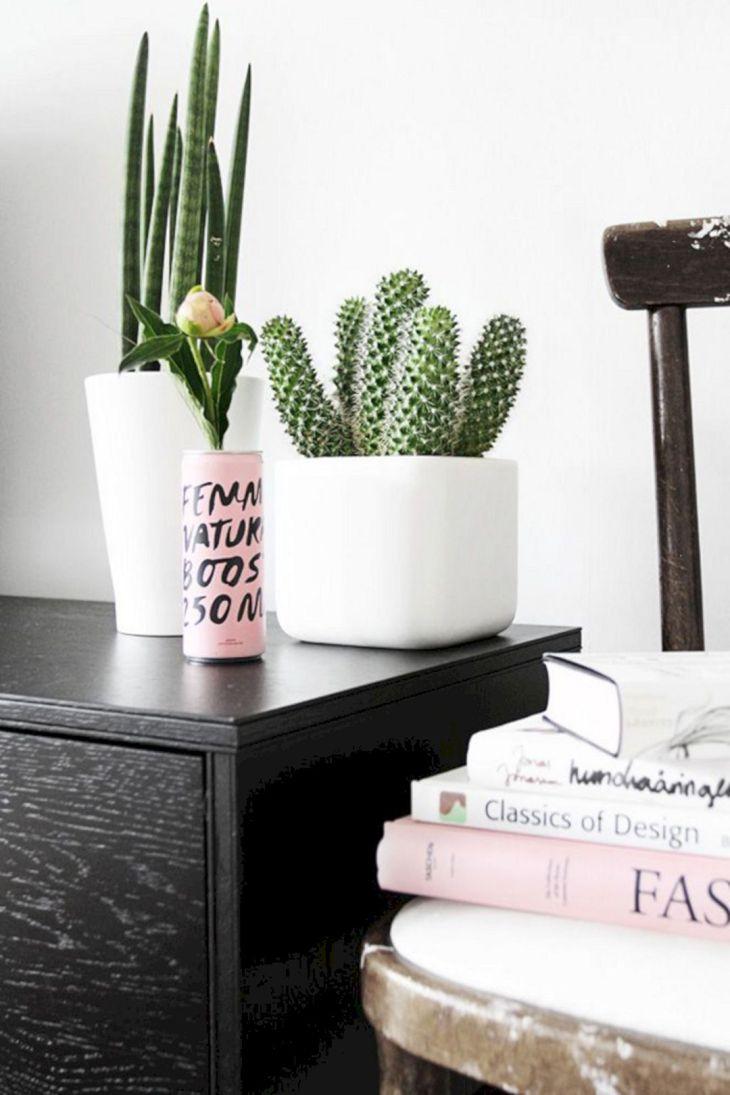 Indoor Cactus Garden Idea