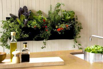 Indoor Kitchen Herb Wall Garden