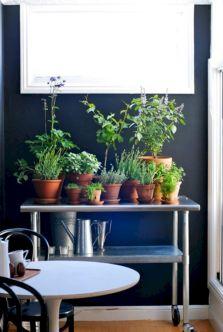 Indoors Herb Garden