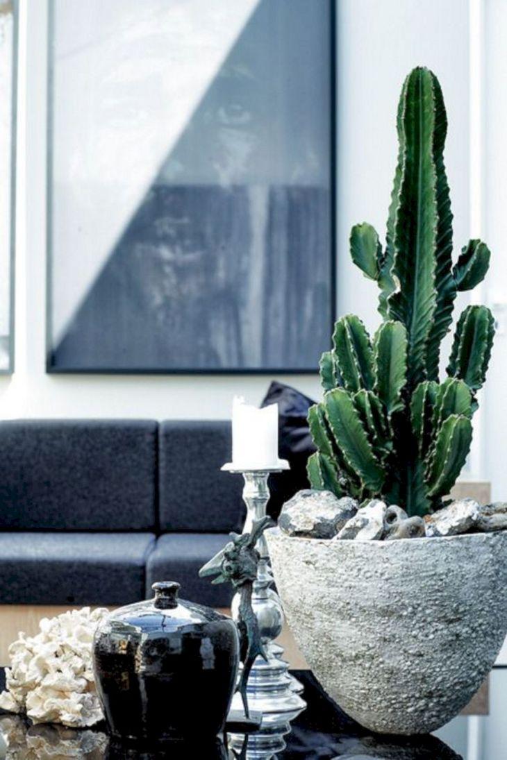 Large Indoor Cactus Plants