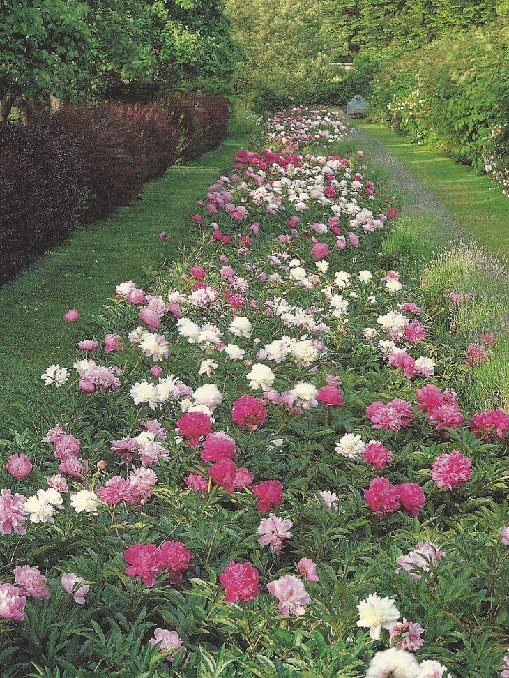 Peony Garden Border Design