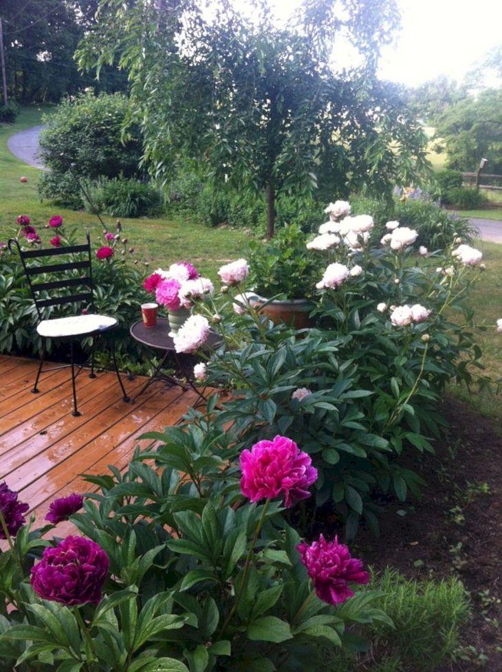 Marvelous 30 peony garden landscaping ideas for best for Garden inspiration ideas