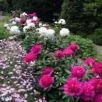 Peony Gardens