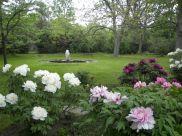 Peony Tree Garden Flowers