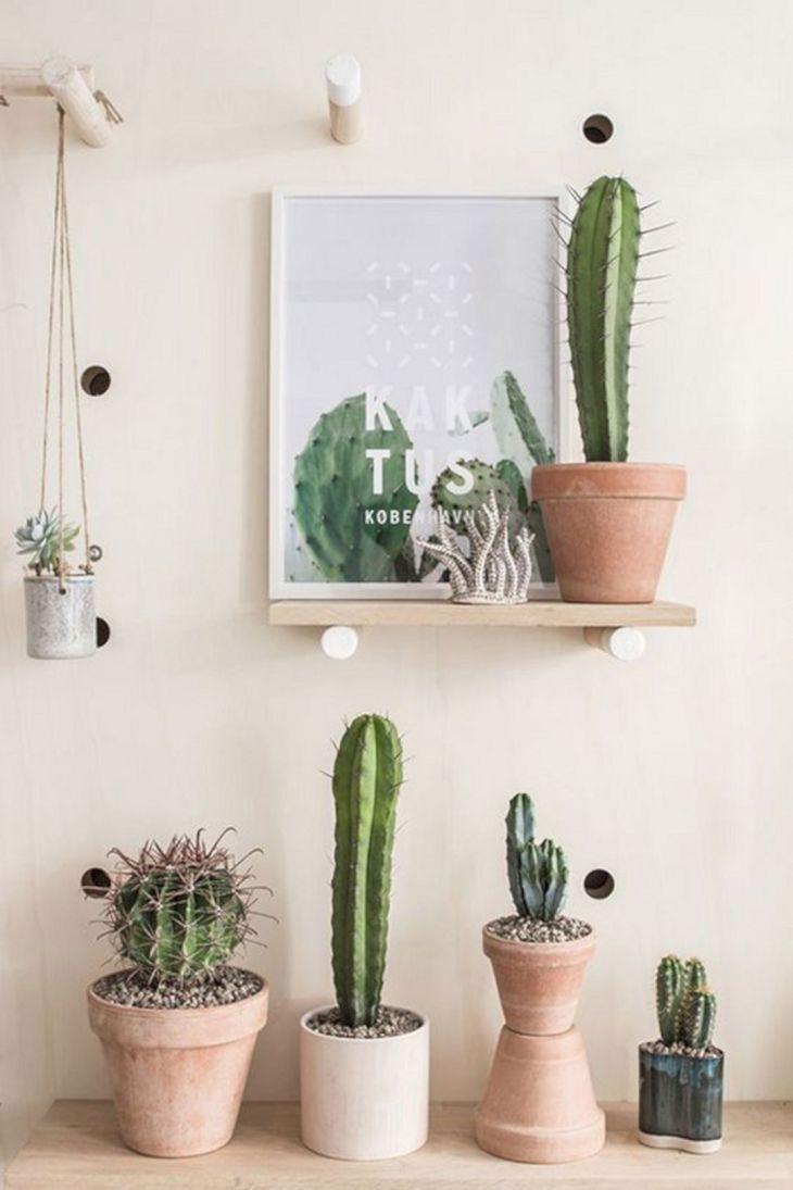 Pinterest Cactus