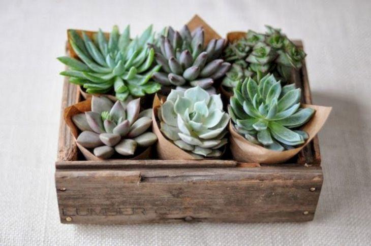 Succulent Centerpieces in Wooden Boxes