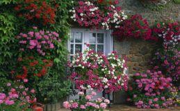 House Flower Garden