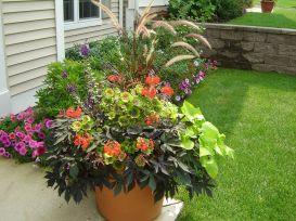 Plant Container Gardening Ideas