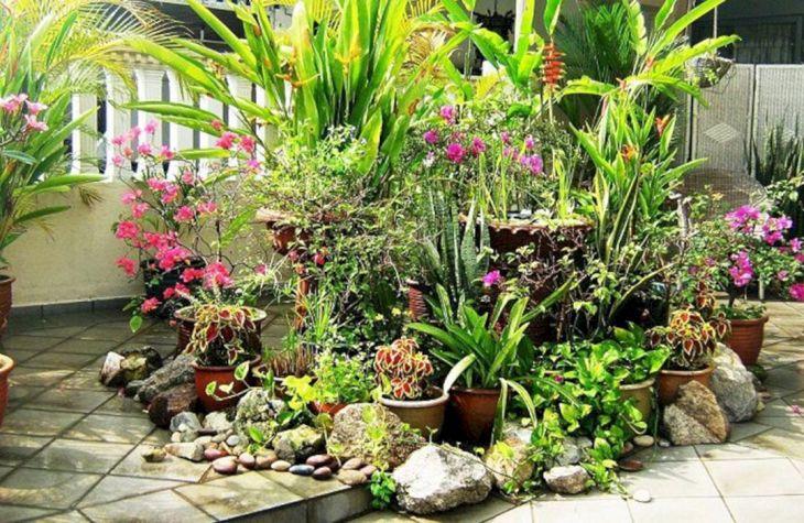 Tropical Container Garden Ideas