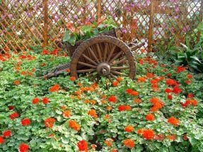 World Beautiful Flower Garden