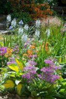Beautiful Iris Garden Ideas 11