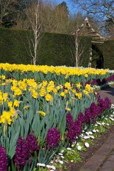 Beautiful Iris Garden Ideas 14