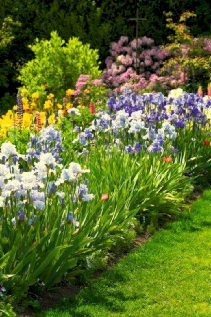 Beautiful Iris Garden Ideas 16