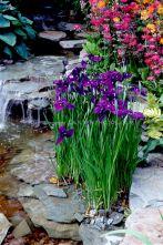 Beautiful Iris Garden Ideas 18