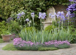 Beautiful Iris Garden Ideas 24