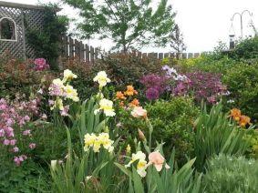 Beautiful Iris Garden Ideas 27