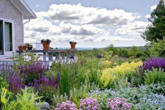 Beautiful Iris Garden Ideas 5