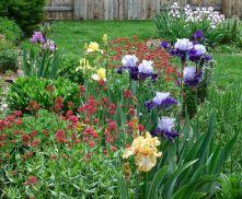 Beautiful Iris Garden Ideas 8