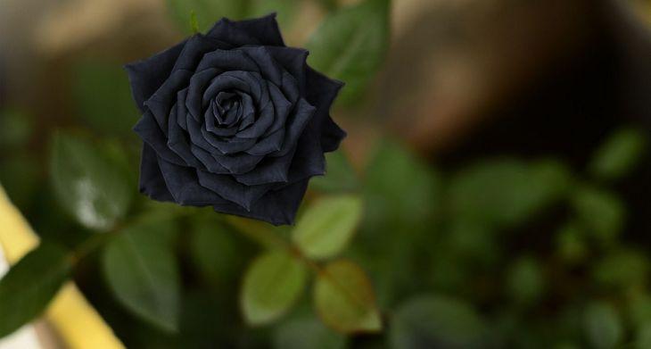 Black Flower Garden Ideas 10