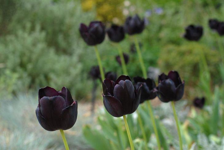 Black Flower Garden Ideas 19