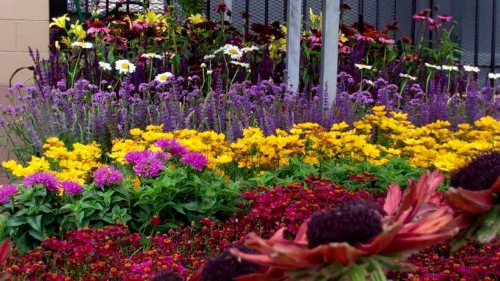 Black Flower Garden Ideas 2