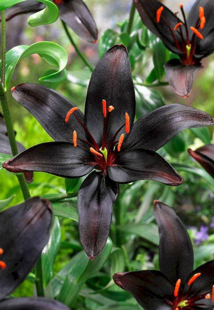 Black Flower Garden Ideas 21