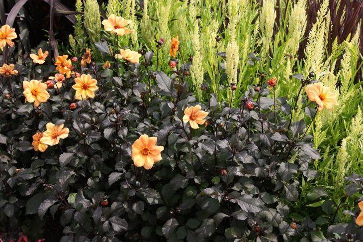 Black Flower Garden Ideas 9