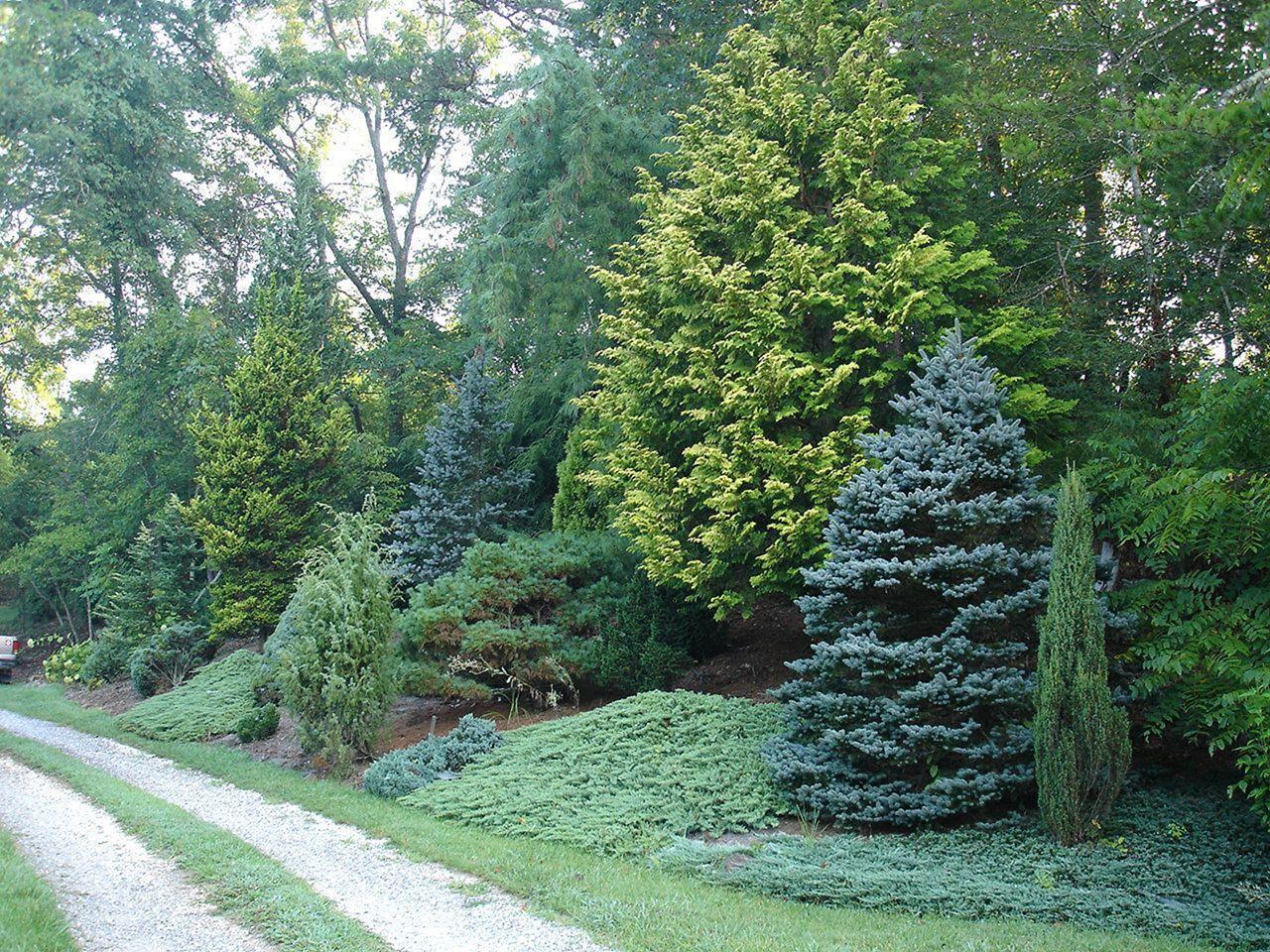 Front Yard Garden With Pine Tree Ideas - DECOREDO