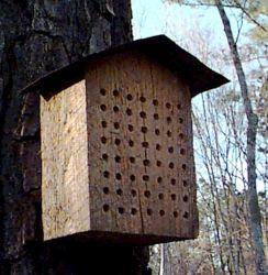 DIY Mason Bee House Design 1