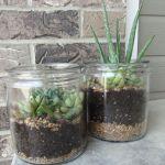 DIY Fairy Terrarium Indoor Garden 15