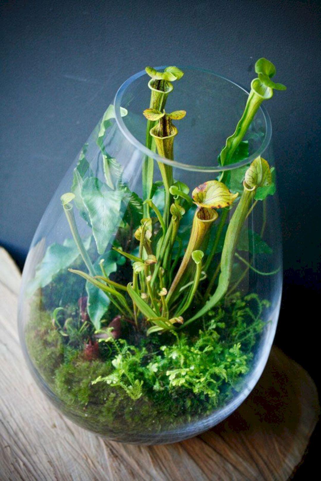DIY Fairy Terrarium Indoor Garden 26