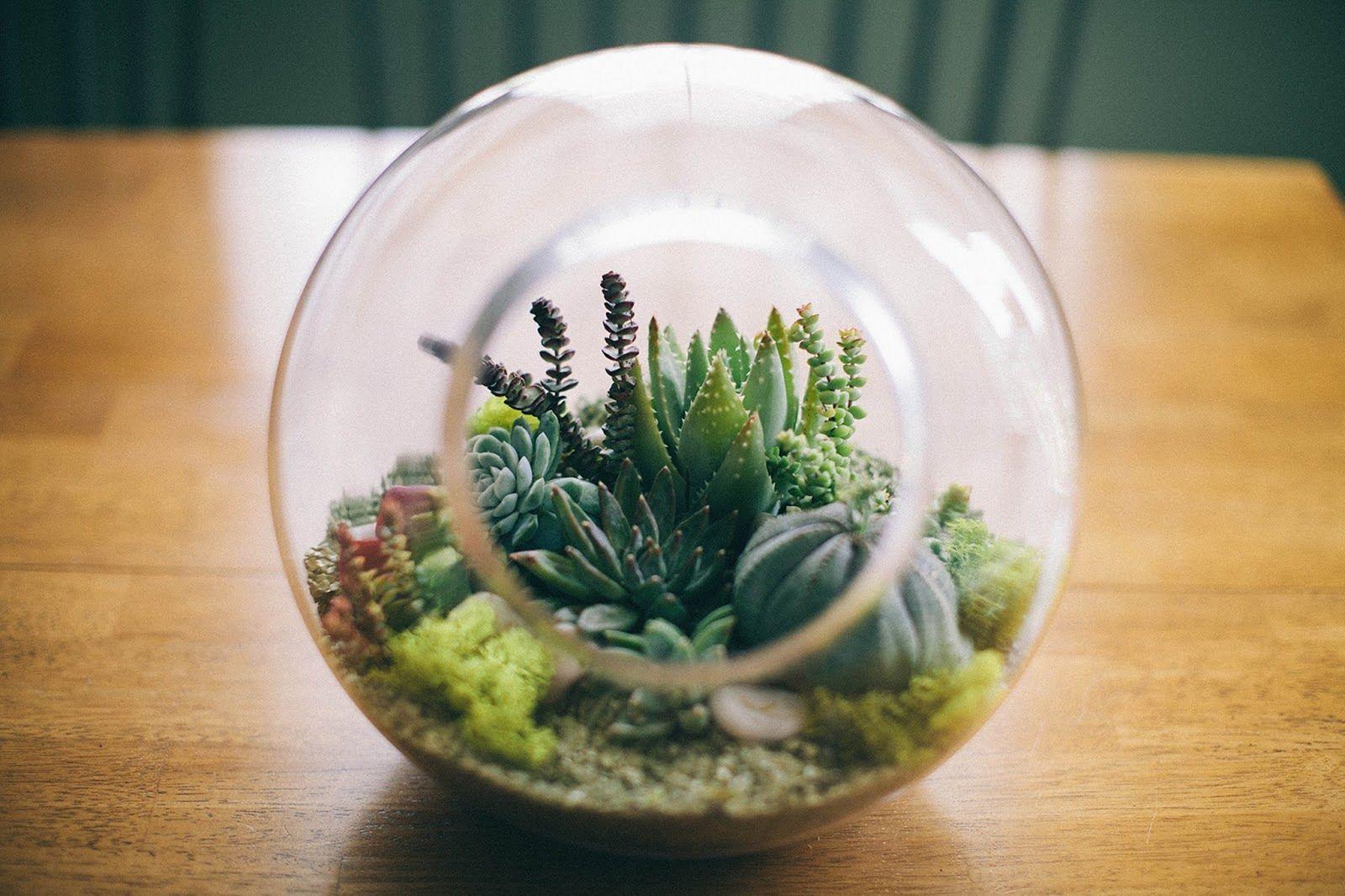 DIY Fairy Terrarium Indoor Garden 7