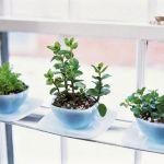 DIY Indoor Herb Garden 25