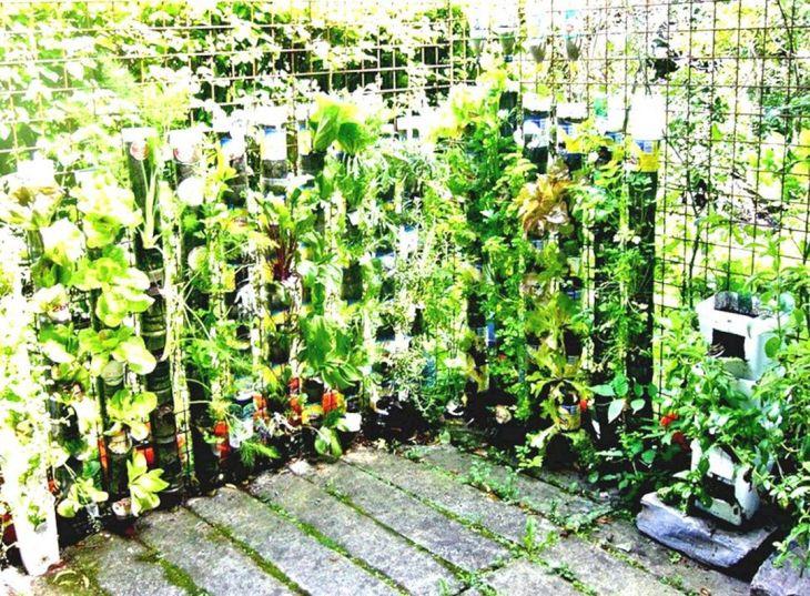 Vegetable Garden Ideas 13