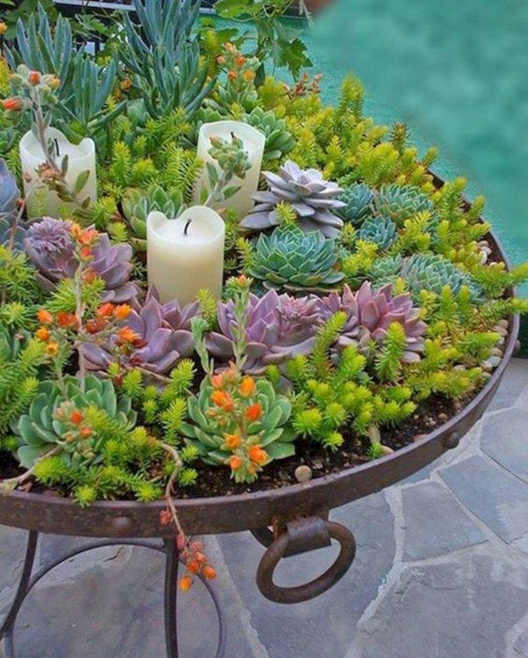 Bautiful succulent garden